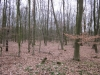 Wald kurz vor dem Frühling